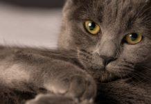 Глибокий погляд і граціозна хода: ТОП-5 порід кішок, у яких не можна не закохатися - today.ua