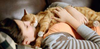 ТОП-3 породи кішок для ледачих господарів - today.ua