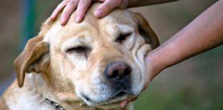 Природжені психологи: ТОП-3 породи собак, які знімають стрес - today.ua