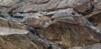 На фото є гірський лев, але не всі можуть відшукати його за 5 секунд - today.ua