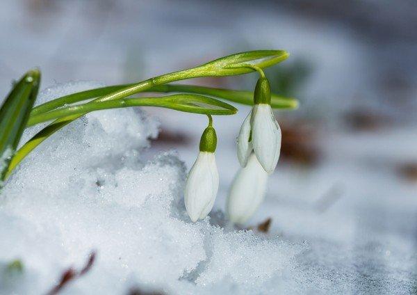 Заморозки і сніг: синоптики шокували прогнозом на другу половину березня  - today.ua