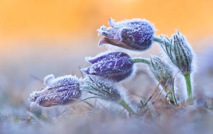 Морозний квітень: синоптики розповіли, скільки в Україні триватиме похолодання  - today.ua