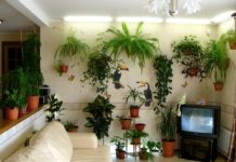 Кімнатні рослини, здатні не лише прикрасити життя, але й зміцнити ваше здоров'я - today.ua