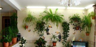 """Кімнатні рослини, здатні не лише прикрасити життя, але й зміцнити ваше здоров'я"""" - today.ua"""