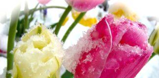 Україну засипле снігом: синоптики розповіли, чи надовго в Україну повернулася зима - today.ua