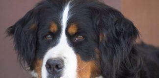 Запам'ятають і помстяться: ТОП-5 найбільш злопам'ятних порід собак - today.ua