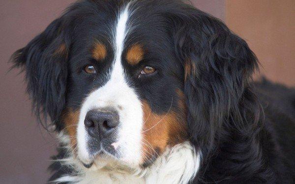Запомнят и отомстят: ТОП-5 самых злопамятных пород собак - today.ua