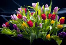 Газеты, уксус и аспирин: как сохранить букет тюльпанов свежим до двух недель - today.ua