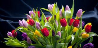 """Газети, оцет і аспірин: як зберегти букет тюльпанів свіжим до двох тижнів"""" - today.ua"""