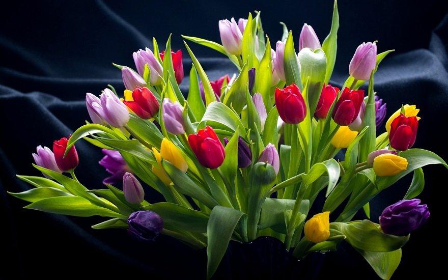 Газети, оцет і аспірин: як зберегти букет тюльпанів свіжим до двох тижнів - today.ua