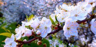 Коли в Україні потеплішає: синоптик розповіла про погоду на початок квітня - today.ua
