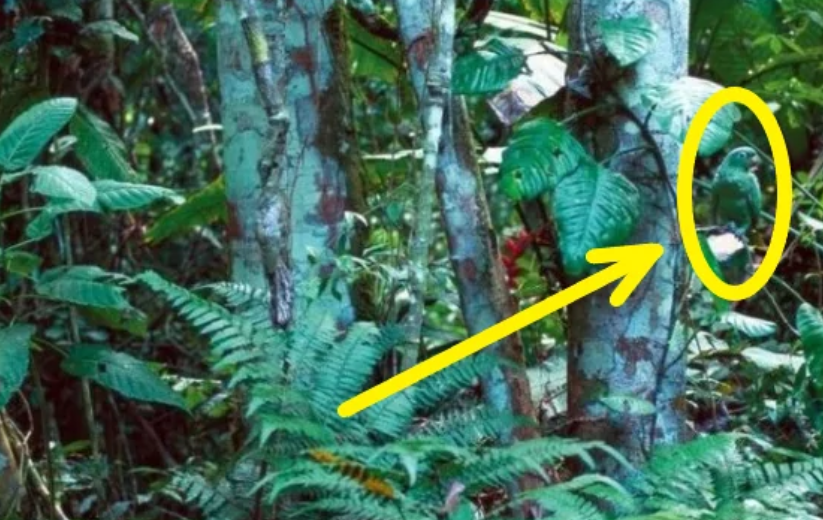 На фото спрятался попугай, но найти его за 10 секунд удастся не всем