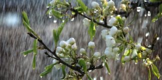 Прогноз погоды на Пасху 2020: на ряд областей Украины обрушатся сильные ливни - today.ua