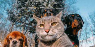 """Коти і собаки можуть врятувати від коронавірусу, - дослідження"""" - today.ua"""
