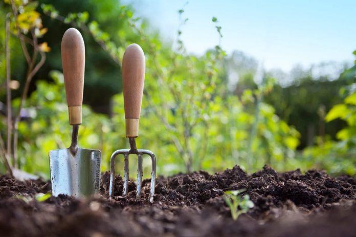 Посівний календар на травень 2020: коли висаджувати овочі, щоб отримати рясний урожай