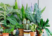 Найнебезпечніші кімнатні квіти: лікарі назвали рослини, що провокують алергію - today.ua