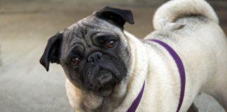 ТОП-3 породи собак, які залюбки позують на камеру - today.ua