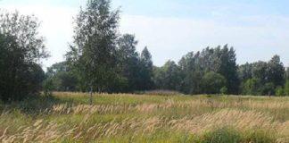 """Тест на уважність: знайди собаку в заростях густої трави за 15 секунд"""" - today.ua"""