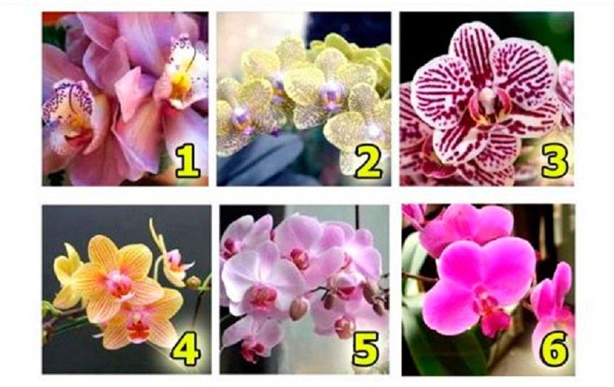 Тест по картинці: виберіть орхідею і дізнайтеся, що зробить вас щасливим - today.ua