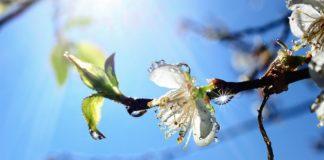Свято 4 квітня: в День Василя Сонячного ворожили на весь майбутній рік - today.ua