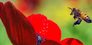 Свято 30 квітня: що потрібно обов'язково зробити в День Зосими Бджільника - today.ua