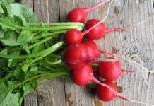 Редиска може бути небезпечною: кому протипоказаний популярний сезонний овоч - today.ua