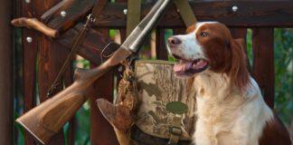 """ТОП-3 найкращі породи собак для полювання на пернатих"""" - today.ua"""