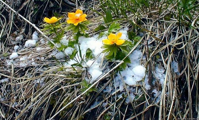В Україні знову вдарять морози: синоптики попереджають про різке погіршення погоди - today.ua