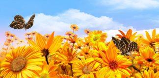 Лякаючий прогноз погоди на літо і осінь 2020 в Україні: коли краще не їхати у відпустку - today.ua