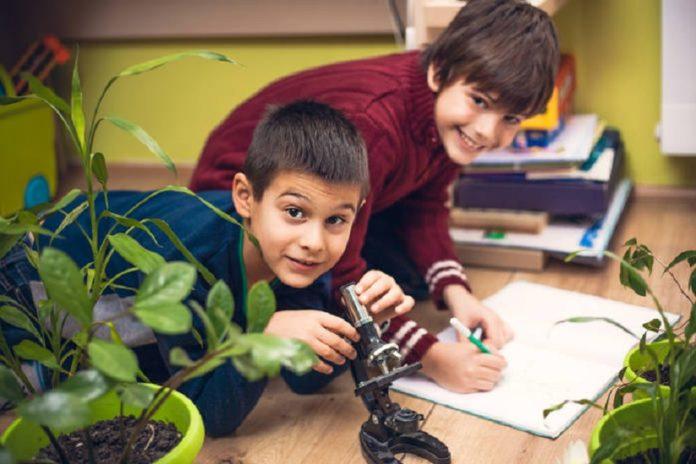 Рослини-талісмани для школярів і студентів: які кімнатні квіти допомагають у навчанні - today.ua