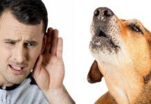 Прикмети про собак: як улюбленці попереджають про погані і хороші події - today.ua