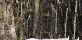 """Тест на уважність: знайдіть трьох оленів, які грають з вами в хованки на фото"""" - today.ua"""