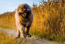 Найдавніші породи собак: ТОП-5 вихованців, одомашнених сотні років тому - today.ua