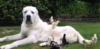 """Охоронець для дачі: породи собак, які краще за інших підходять для заміського життя """" - today.ua"""