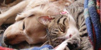"ТОП-3 породи собак, які дружать з котами"" - today.ua"