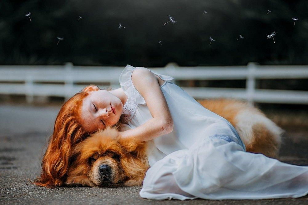 Прикмети про собак: як улюбленці попереджають про погані і хороші події