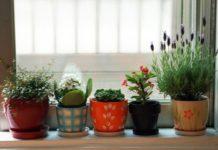 Кімнатні квіти вилікують нежить: які рослини корисні при застуді - today.ua