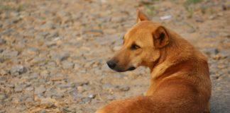 Собака выпрашивала еду на улице, но только спустя месяц стало понятно, почему она была вечно голодной - today.ua