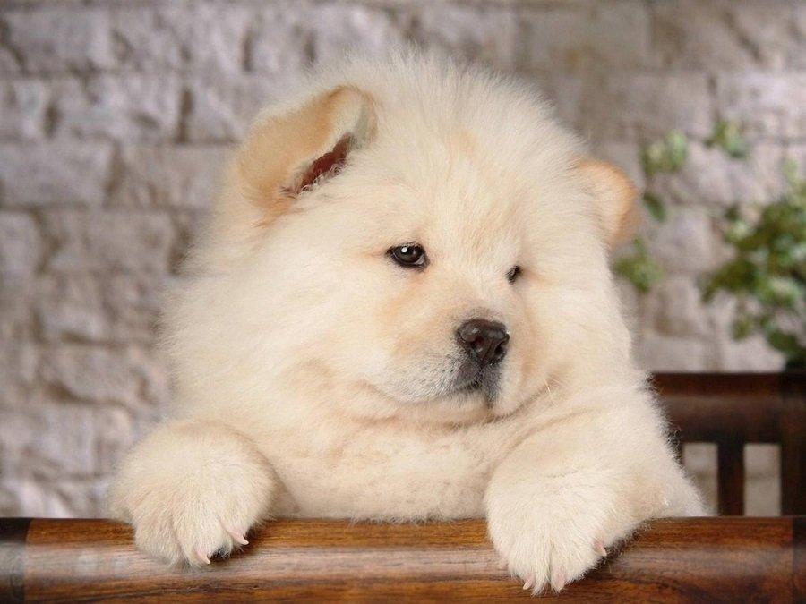 ТОП-3 породы собак, которые помогут пережить карантин