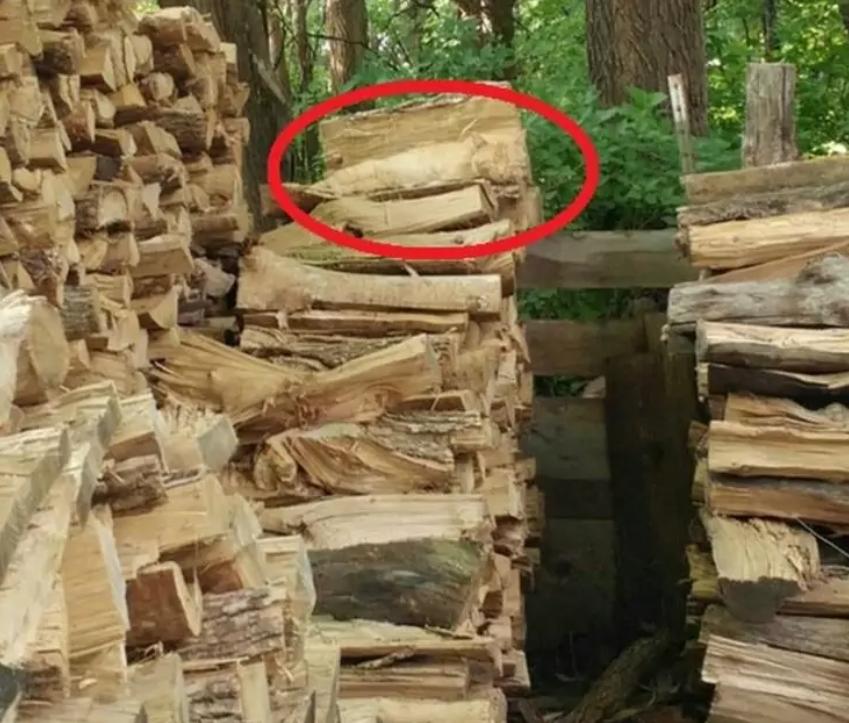 На фото сховався кіт: знайдіть тварину за 20 секунд