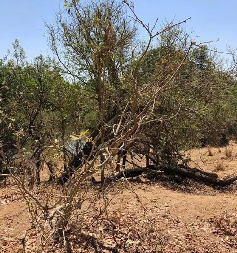 На фото зображений жираф, але знайти його за 15 секунд зможуть не всі
