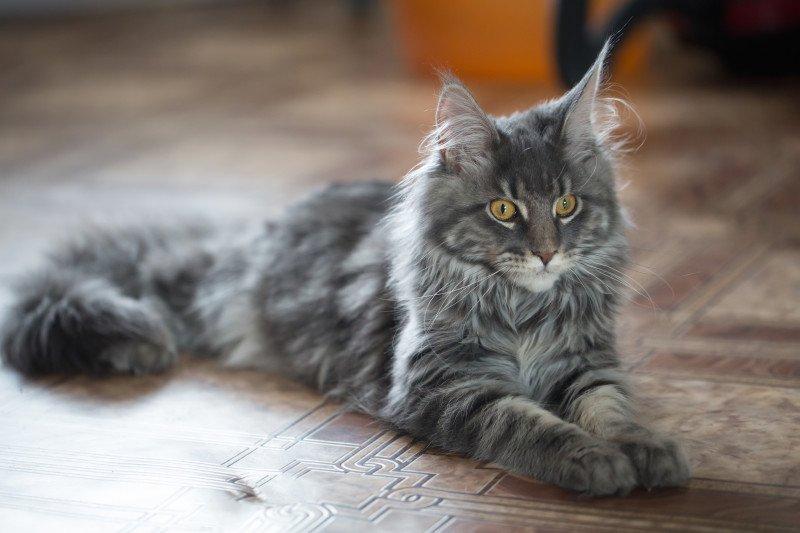 Гроші і кішки: як домашні тварини допоможуть залучити достаток у ваш дім