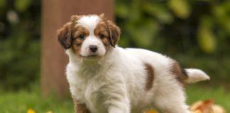 """ТОП-5 нових порід собак, про яких ви могли навіть не чути"""" - today.ua"""