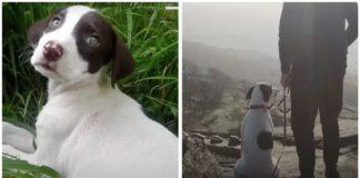 Собака преодолела тысячу километров для того, чтобы соединиться с семьей - today.ua