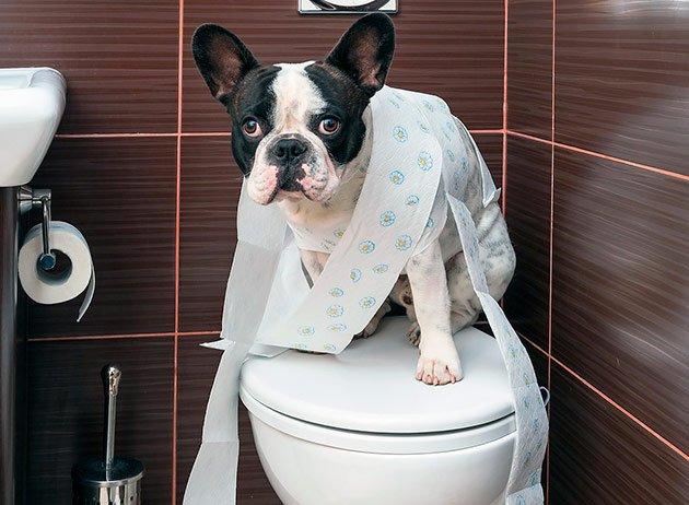 Не постраждають від самоізоляції: ТОП-3 породи собак, з якими не буде проблем на карантині