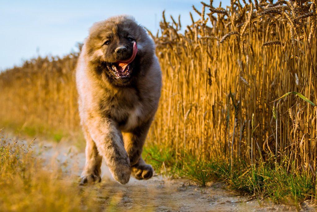 ТОП-3 породы собак, авторитет которых нужно заслужить