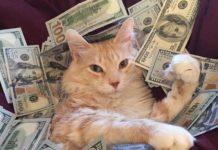 Прирікають на багатство і успіх: ТОП-3 породи кішок, які притягують гроші в оселю - today.ua