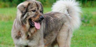 """ТОП-3 породи собак, які відчувають владу над людьми"""" - today.ua"""