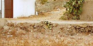 """Тест на уважність: на фото сховався кіт, але знайти його за 20 секунд виявиться не просто"""" - today.ua"""