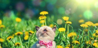 Аномальна спека вдень і заморозки вночі: синоптики розповіли про погоду на кінець квітня - today.ua